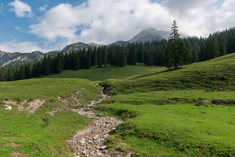 Cloudy Cortina