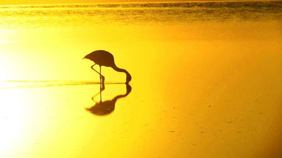 Silhouette flamingo in orange lake