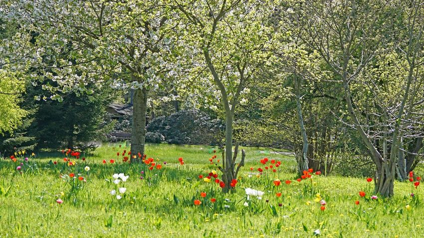 Frühling Beauty In Nature Day Field Flower Flower Head Flowerbed Flowering Plant Fragility Freshness Grass Green Color Growth Land Landscape Nature No People Ornamental Garden Outdoors Plant Springtime Tranquil Scene Tranquility Tree Vulnerability