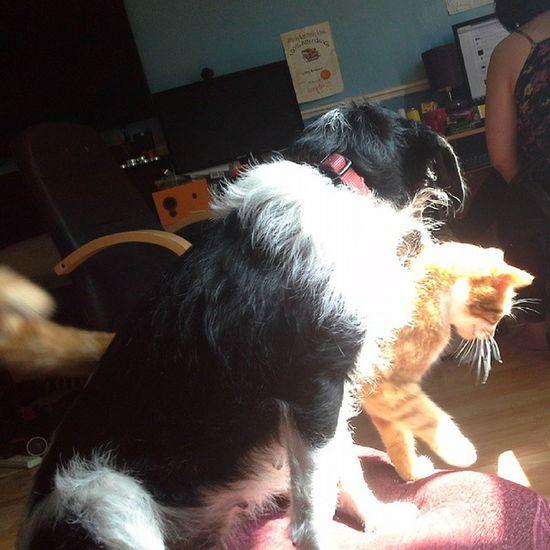 Best mates Molly T Dog & Hobbes J Cat Besties Mollydog Hobbes Tarncat mollydog