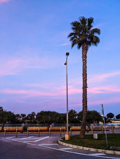 Palm trees by road against sky during sunset