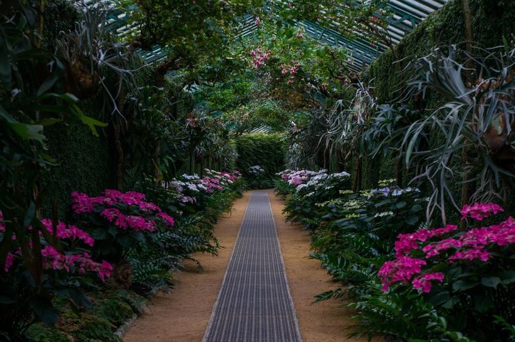 Serres De Laeken (Brussels). Greenhouse Tunnel Flowers Brussels Belgium Dusk Market Reviewers' Top Picks