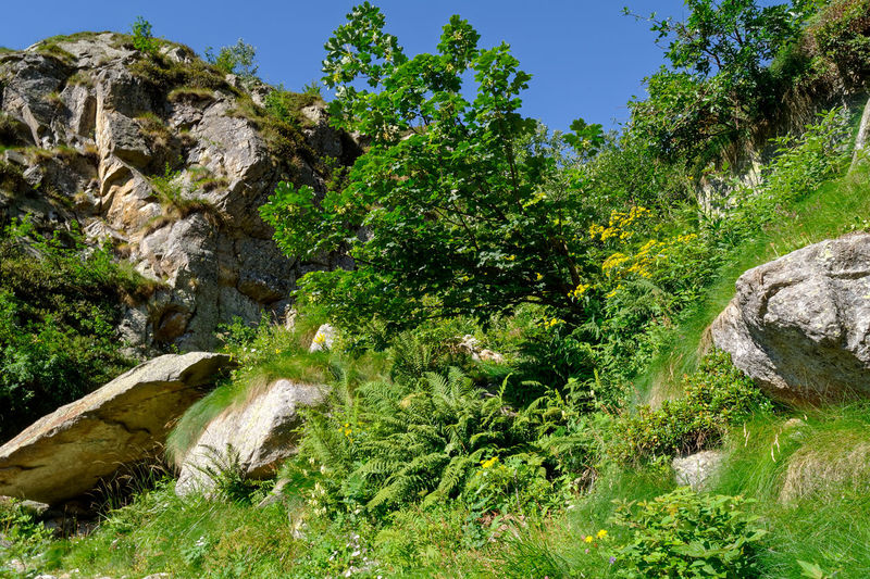 Trees and plants growing on rock against sky
