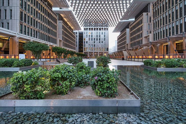 Potted plants by building in city