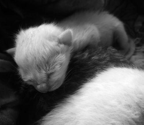 Domestic Animals Pets Domestic Cat Mammal Close-up Animal Themes Softness Indoors  Feline Newborn NewBorn Photography New Born Photography Cute Cute Pet Cat Cats Of EyeEm Love Kitty Kitten