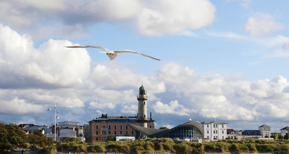Seagull flying in a city