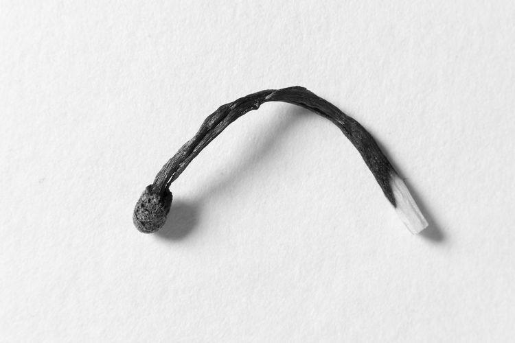 En busca de una explicación Cerilla Arch Black And White Blanco Y Negro Close-up Concept Matches White Background