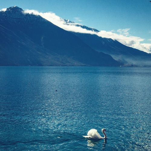 Beauty In Nature Blue Sky Lake Italia Lago Di Garda Lake Garda Garda Lake Italy Landscape Landscape_Collection Sea Scenics - Nature Beauty In Nature Waterfront Nature Day Tranquil Scene Animal Tranquility Blue Non-urban Scene Mountain Outdoors