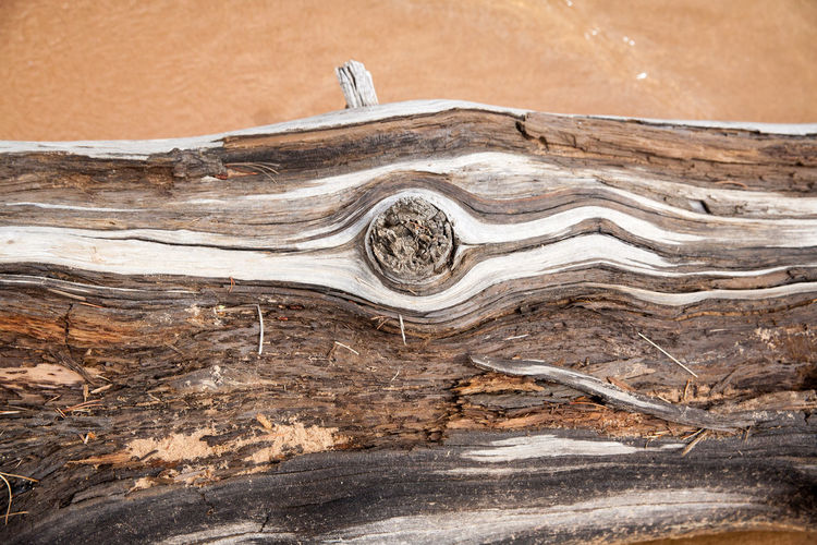 Close-up Driftwood Lake Lakeshore Natural Pattern Nature Outdoors Sand Textured  Wood Wood - Material