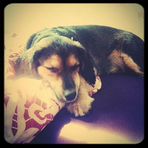 my bestfriend :) Sleeping Dog First Eyeem Photo