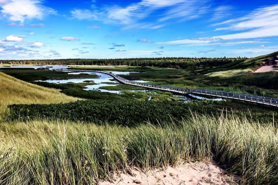 Tranquil Scene Marshland  Sand Dune Bridge Over Water Green Nature