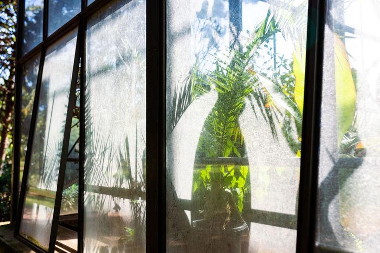 Plants seen through glass window