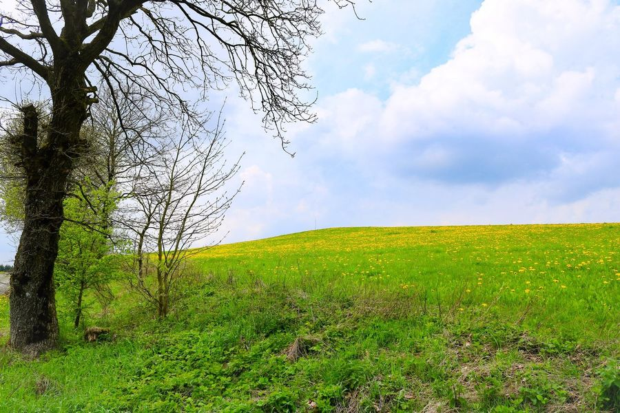 Nature Sky Tranquil Scene Scenics Tranquility Tree Grass Beauty In Nature Landscape Green Color Day Cloud - Sky Outdoors Field Growth No People Rural Scene Mountain
