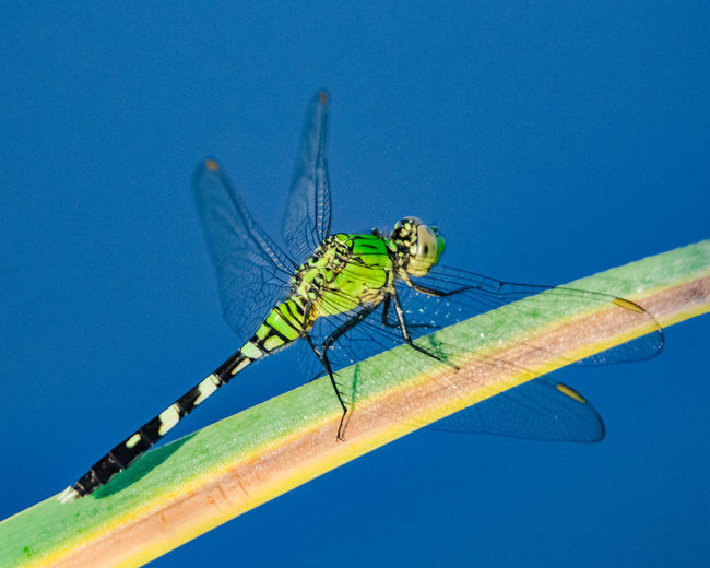 Damselfly on a blade of grass Blue Insect Close-up Damselfly Dragonfly Blade Of Grass Animal Wing Winged Perching