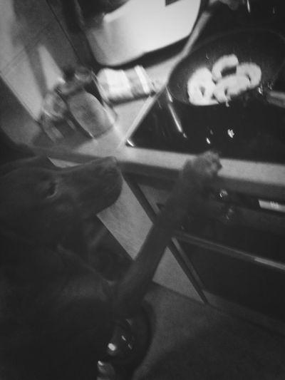 Cooking Chef My Dog Joy