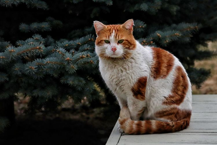 Scrappy stray Domestic Cat Pets One Animal Feline Animal Themes Sitting No People Looking At Camera Outdoors Day Nature Beauty In Nature