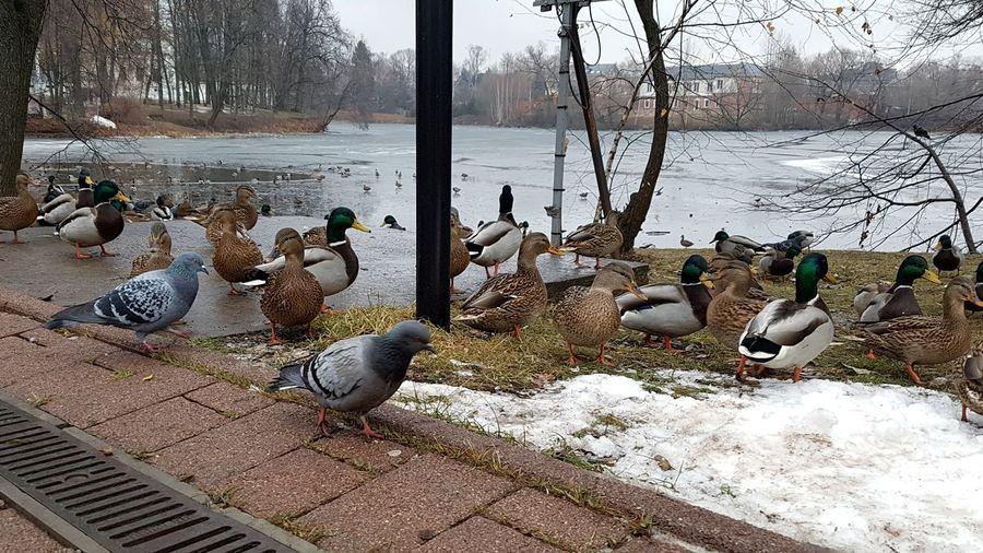 Birds in a winter