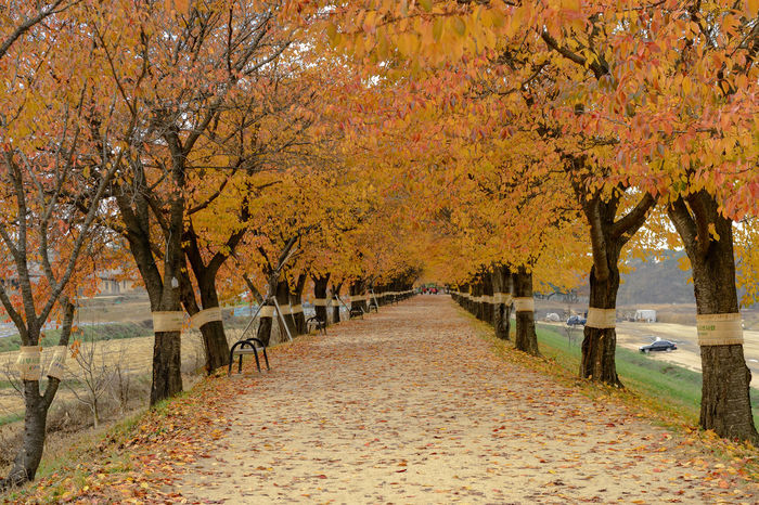 Autumn Beauty In Nature Branch Change Day Hockey Ice Hockey Landscape Leaf Maple Maple Tree Nature No People Orange Color Outdoors Park - Man Made Space Scenics The Way Forward Tranquil Scene Tranquility Tree