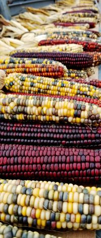 Fall Indian Corn Supermarket Multi Colored Market Retail  Backgrounds Business Finance And Industry For Sale Close-up
