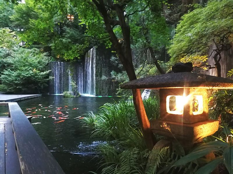 Tree No People Water Outdoors Nature Freshness Traditional Pond Carp Garden Stone Material Stone Lantern Meguro Gajyoen Waterfall Artficial Light Tranquility Japanese Garden