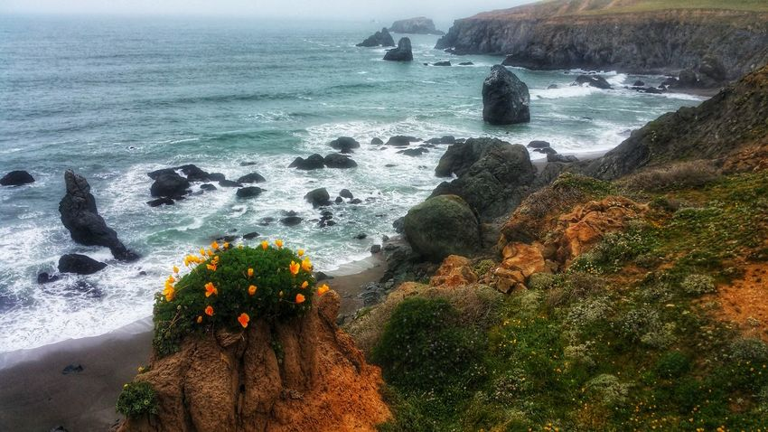 Sandstone Hoo Doo-Wild Poppy Crown Poppies  Orange Hoodoos Crown Atop Bluff Cliff Ocean Aerial View Background Copy Space Moment Timeless Zen Water Sea Beach Tree Flower Wave High Angle View Sky Horizon Over Water Foreground Rushing Surf Rocky Coastline Growing Coast Rugged