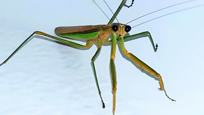 Bugs Praying Mantis Bugphotography Insect Photography Insect Collection