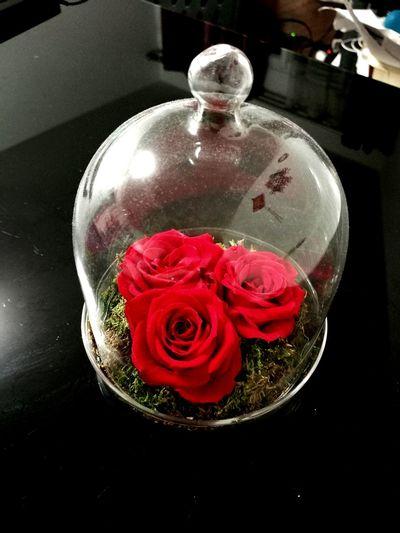 Rose éternelle Red Flower Nature Belle Belle Et La Bete Fragility Roses🌹 Rose Garden Roses Are Red