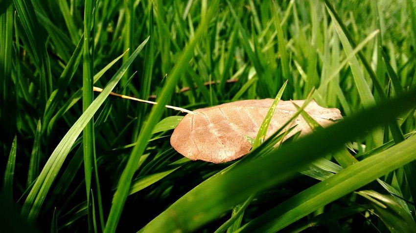 Droop. Life Leaf Grass Green Nature Fresh StillLifePhotography EyeEm Gallery EyeEm Best Shots Droopy
