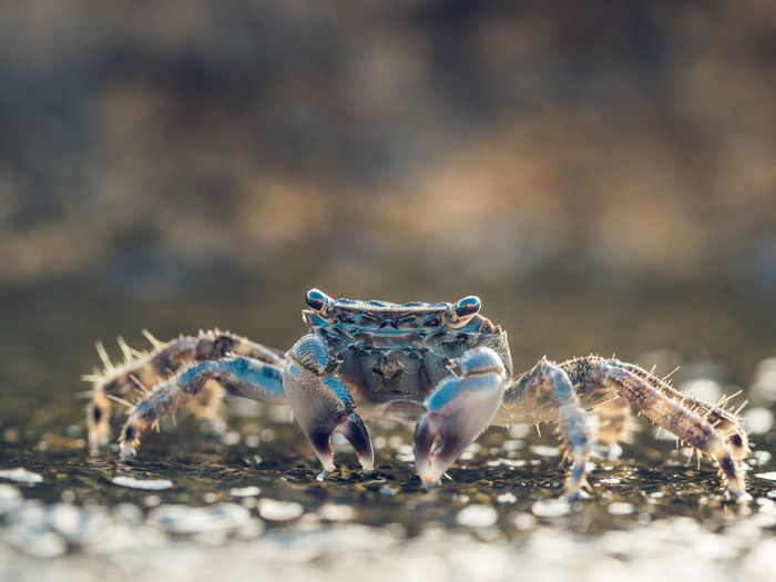 Close-up of crab on land