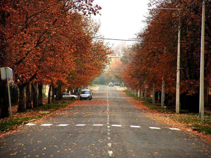 Autumn Street Autumn Autumn Leaves Autumn Road Autumn Street Brown Leaves Road Rusty Tree Street Tree Urban Road Weather