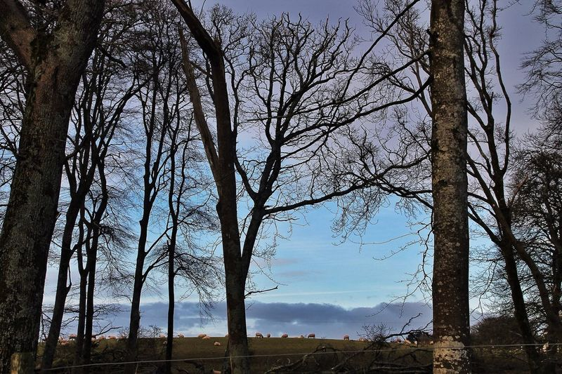 Come with me into the woods where Spring is advancing, as it does, no mater what. Tadaa Community In The Landscape Cloud And Sky