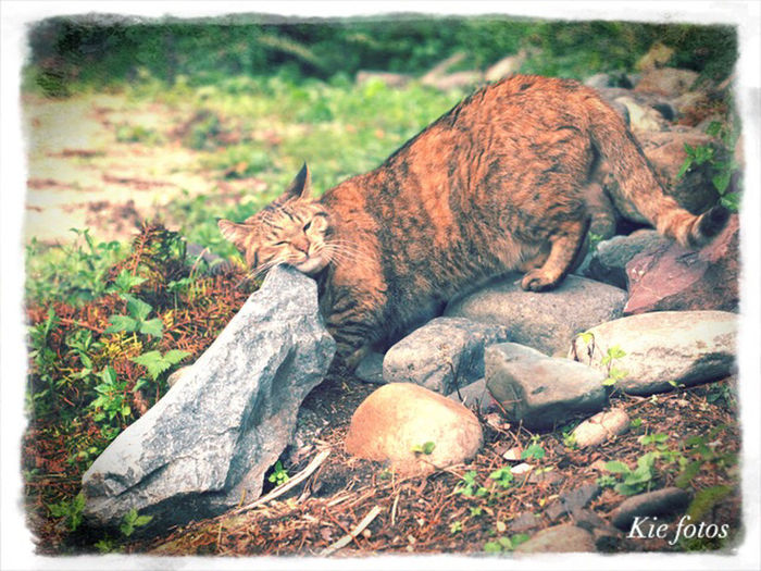 Relax time Cat Cat Lovers Forest Momocafe Signbordcat Browntabby