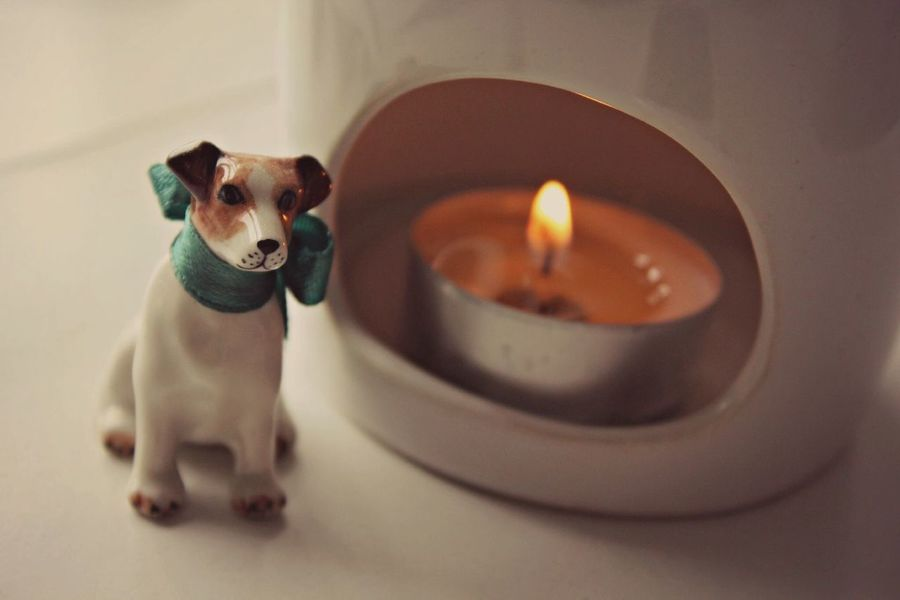 Candle Dog Minimalism Minimal Dogs Jackrussell Parson Russell Terrier Cute Pets Warm Hello World Taking Photos