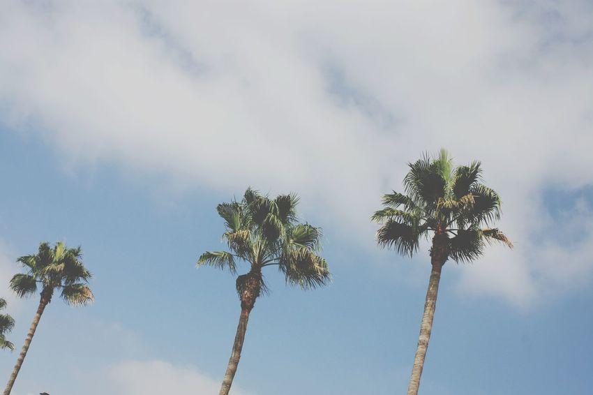 EyeEm Selects Sky Blue Cloud - Sky Palm Tree Tree EyeEmNewHere Zoom_iin EyeEm Gallery EyeEm Best Edits Textures Eyeemphotography Close-up EyeEm Best Shots Whatdoyousee EyeEm Outdoors