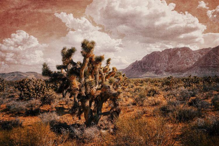 Red desert Lasvegas Summerlin Nevada Nevada Desert Desert Nature Find Your Happiness Summer Memories 🌄 My Year My View