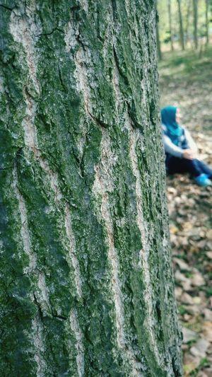 Day Nature Tree Close-up Detay Umutherzamanvardır Hope.✌ Hayatagulumse Smile ✌