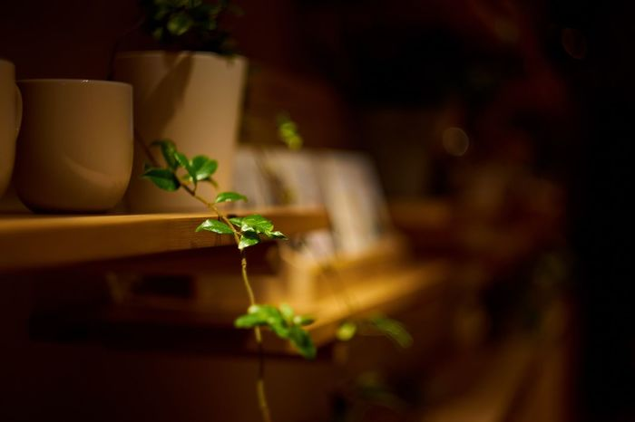 Plant Potted Plant Indoors  Herb No People Leaf Close-up Nature Day Freshness Mood Of The Day Moody Light And Dark Light And Shadow Calm And Quiet Calmness Calm Cups And Mugs Nature Focus On Foreground Green Color Plant Night Table