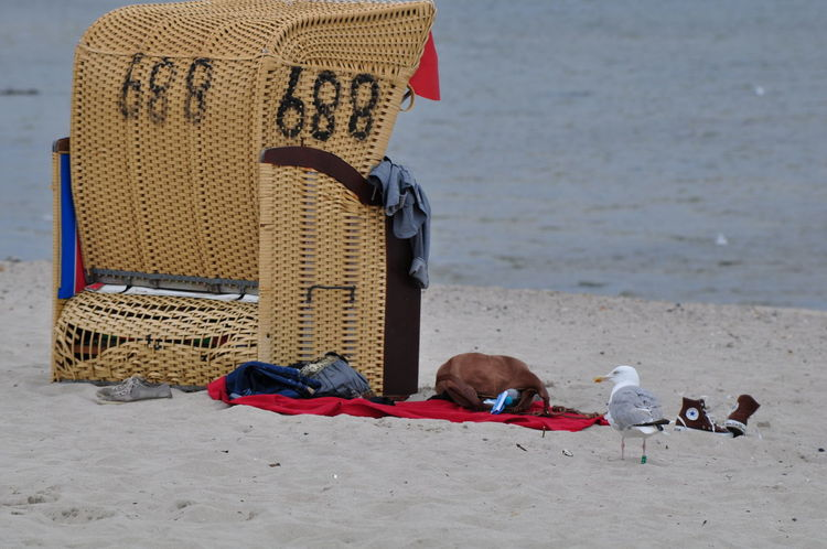 Is anyone looking Beach Life Beach Photography Bird Photography Hello World One Animal Seaview Taking Photos Wrecker