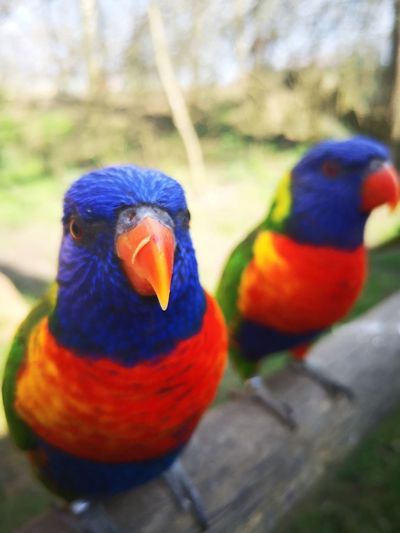 Birds Colorful