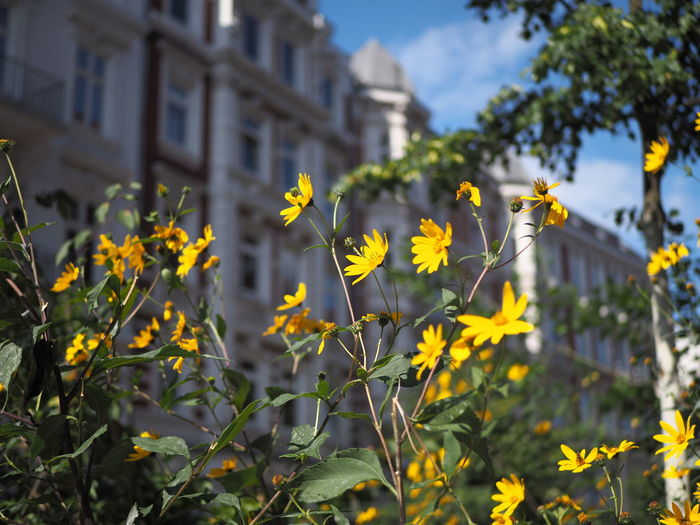 Close-up of yellow flowering plant against building