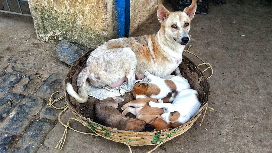 Mother's Care. Animal Themes Dog Domestic Animals Pets Mammal High Angle View Street Photography Live From The Street Puppy In A Basket Mamma Dog And Her Puppies Puppy Sleeping Puppies Sleeping Puppy Puppies Mama Dog And Her Puppy No People EyeEm Selects