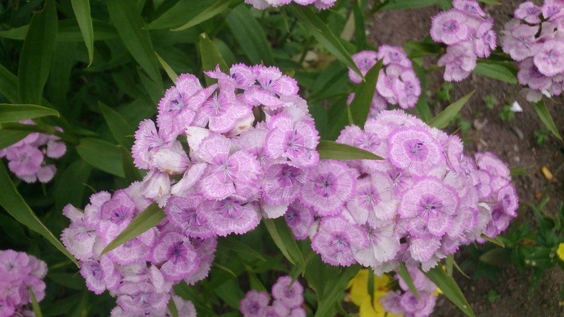 Flowers Green Pink Flower Macro Pink Flower Sammer 2015 Nature