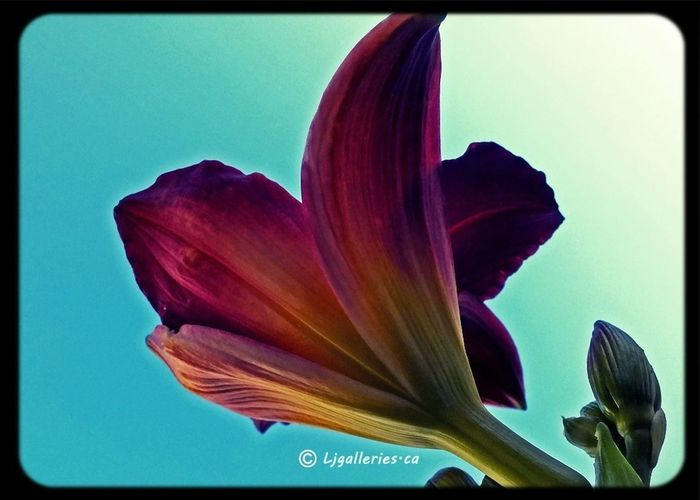 Taking Photos All_shots Onlyflowers Flower#garden#nature#ecuador#santodomingoecuador#eyeEmfollowers#iphoneonly#nofiltrer#macro_garden#pretty#beautiful#followme#sho