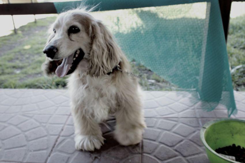 DogLove Dog Photography