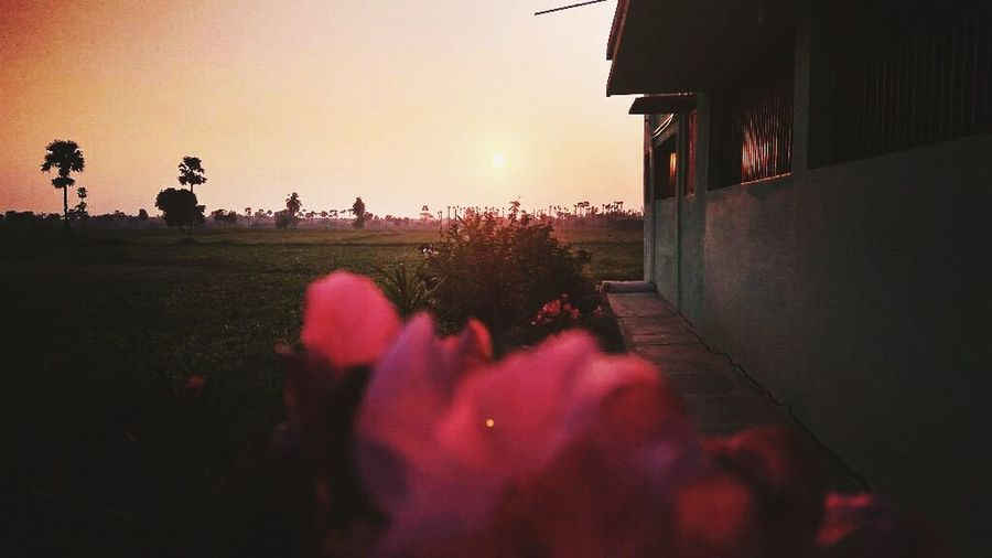 Travel Sunset Plant Travel Destinations Flower Beauty In Nature Nature Night Outdoors Sky People Adult