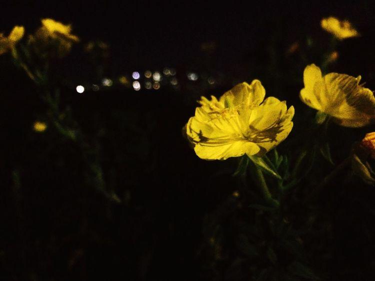 ㄱ좌동 Gajwadong South Korea Night Walk Flowers Street