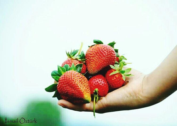 Strawberry Kalkim Kazdaglari çanakkale First Eyeem Photo