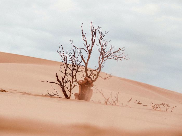 Bare Tree On Sand Dune In Desert Against Sky