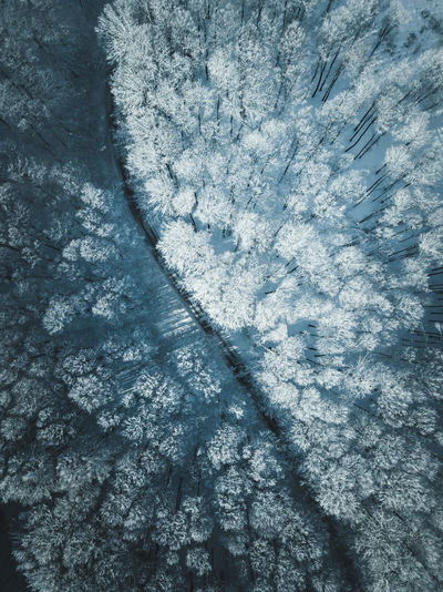 Aerial view of snow covered trees Winter Snow Cold Temperature Frozen Backgrounds No People Ice Day Nature Full Frame Beauty In Nature Water High Angle View Outdoors Close-up Frost Crystal Textured  Aerial View Snow Covered Forest Trees Light And Shadow Blue Winter