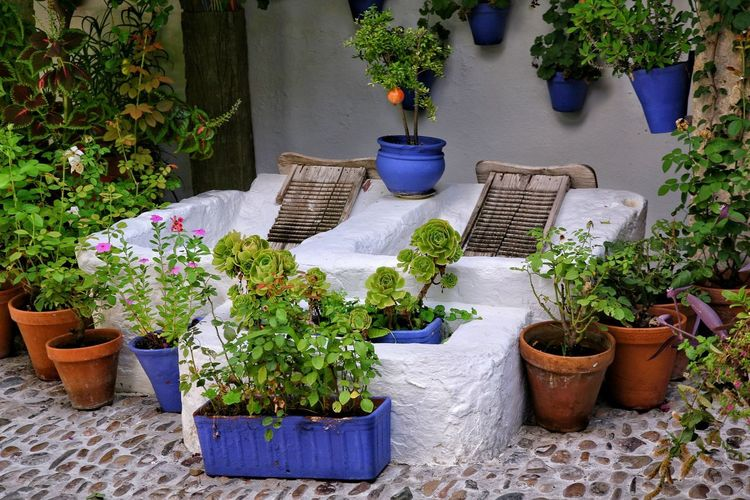 Plant Potted Plant Front Or Back Yard Chair Flower Outdoors Patio Table Day Growth Nature Summer Flowerbed No People Greenhouse Patios De Córdoba Lavadero Beauty In Nature Nature Architecture